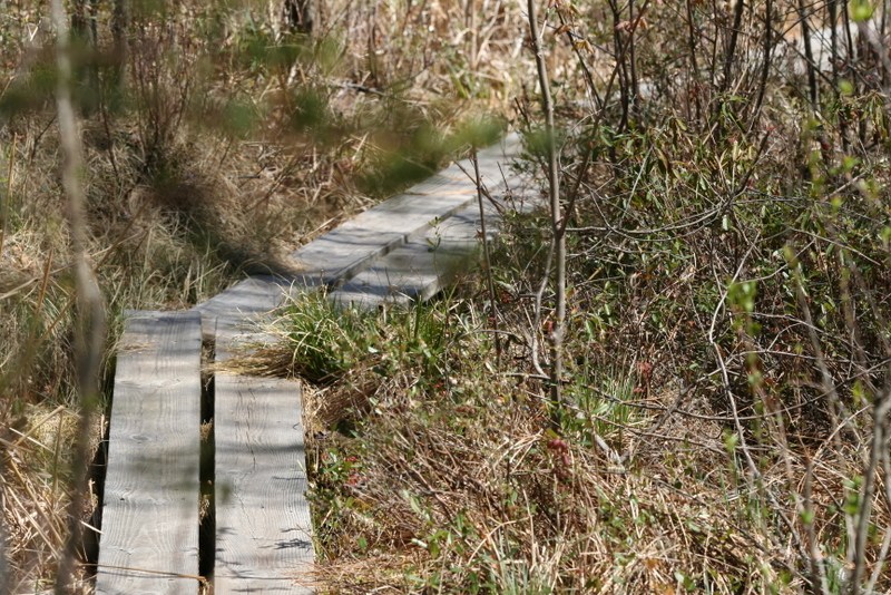 Boardwalk over Ponemah Bog