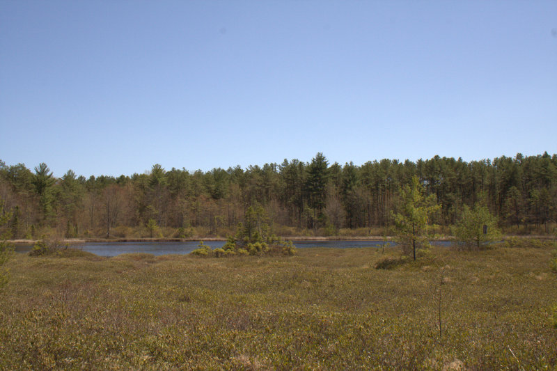 View of Ponemah Bog
